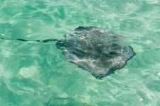 Stingray City - Grand Cayman