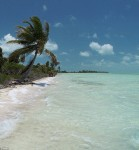 Leonardo DiCaprio to Build an Eco Resort - Belize